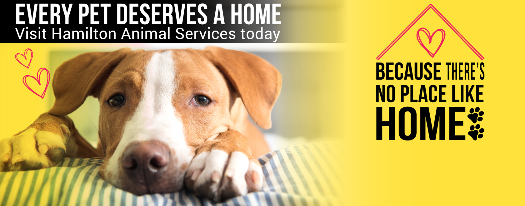 Animal House Back Bar - animal-services-pet-adoption-campaign-banner-july2018_Top Animal House Back Bar - animal-services-pet-adoption-campaign-banner-july2018  Snapshot_304341.png