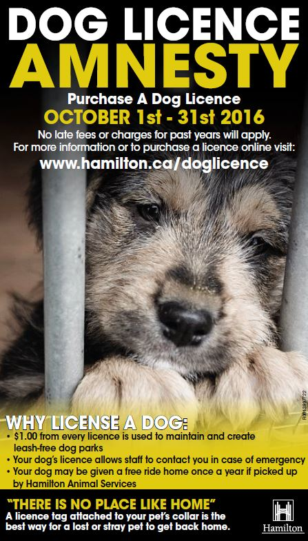 Dog Licence Amnesty Month - October 1 to 31. Purchase a dog licence and no late fees for past years will apply.