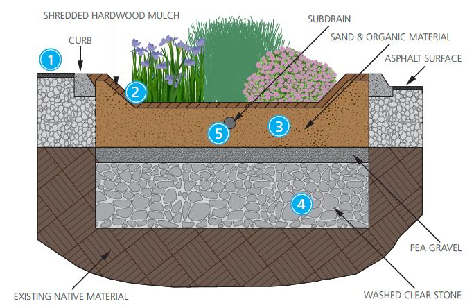 Illustration showing construction of a rain garden