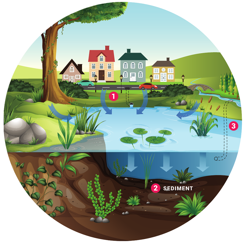 Illustration showing the steps of how a stormwater pond works