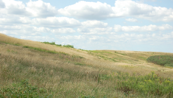 Photo of grassy rolling hills