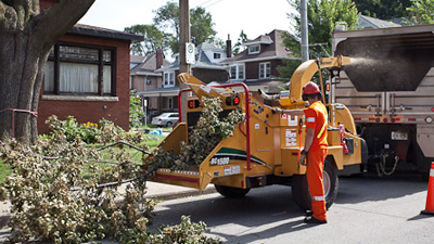 forestry crew cleaning up tree storm damage