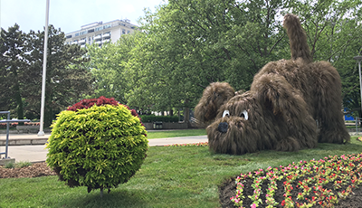 View of shaggy dog & ball Floral Topiary display in front of Hamilton City Hall