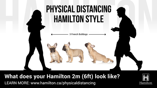 Physical Distancing 3 french bulldogs