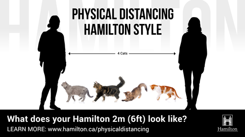 Physical Distancing 4 cats