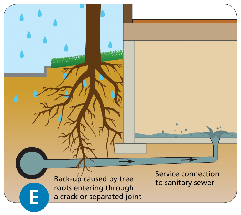 Illustration Tree roots in Sewer