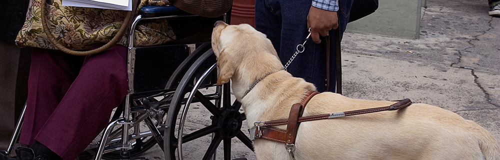 Service dog beside a wheelchair