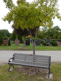 Cemeteries memorial tree and bench